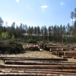 В Коростенському районі затримали крадія лісу