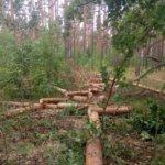 Підпільних лісорубів поліція затримала на Коростенщині