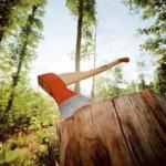 Прокуратура Житомирщини підтримуватиме обвинувачення стосовно майстра лісу, недбалістю якої лісовому фонду завдано збитків на 1,2 млн грн