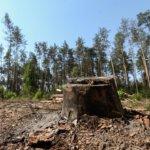 В Коростене полиция продолжает противодействовать незаконной вырубке деревьев