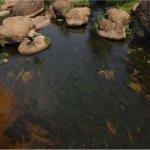 В речке Уж в районе Коростеня в 1.5 раза превышен допустимый уровень кишечной палочки