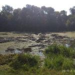 Начаты работы по очистке речки Уж в черте г.Коростень. Фото