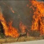 Закликаємо жителів Коростенщини не спалювати суху траву! Це небезпечно і заборонено законодавством України!